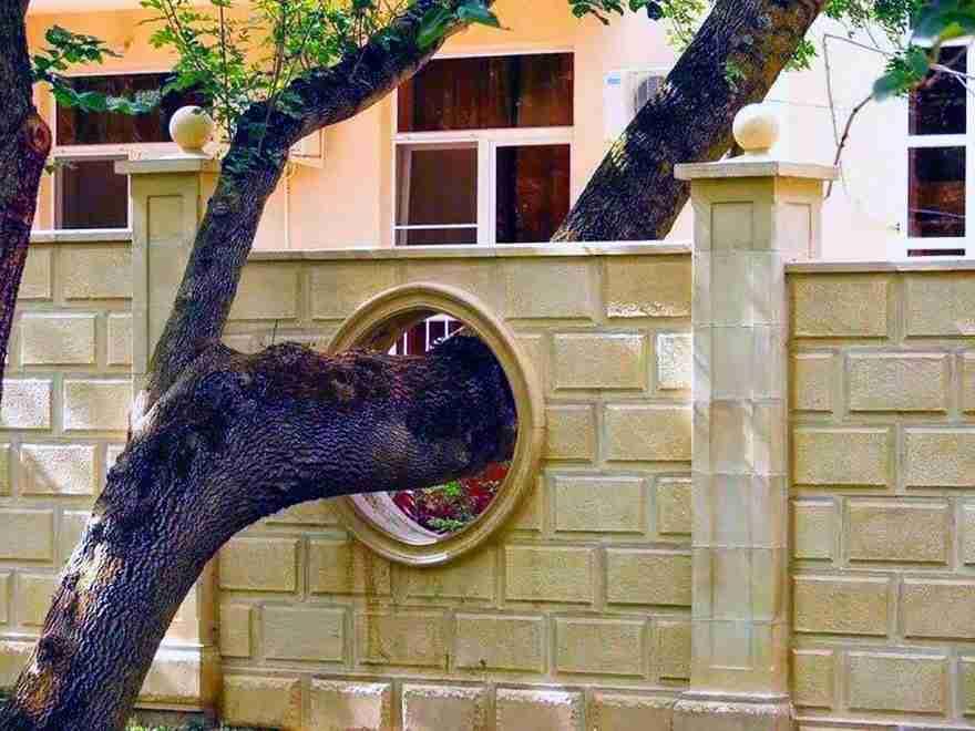 arbol-atravesando-muro